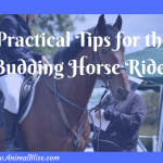 16 Interesting and Practical Tips for the Budding Horse Rider