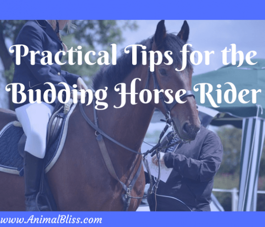 Practical Tips for the Budding Horse Rider