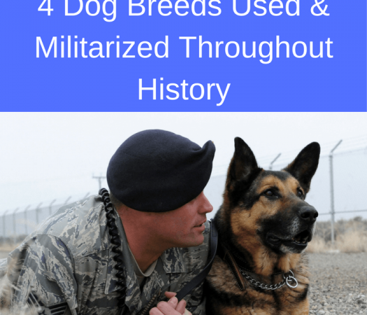 Dogs of War: 4 Dog Breeds Used and Militarized Throughout History