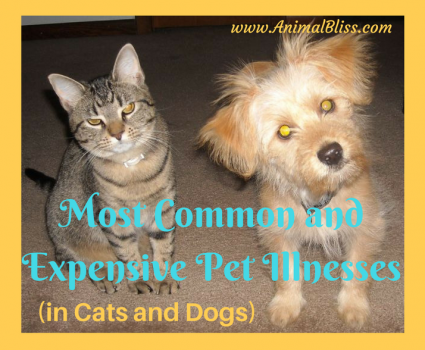 Most Common and Expensive Pet Illnesses – Cats and Dogs