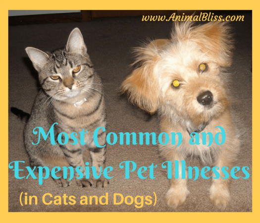 Become aware of the most common and expensive pet illnesses in cats and dogs.