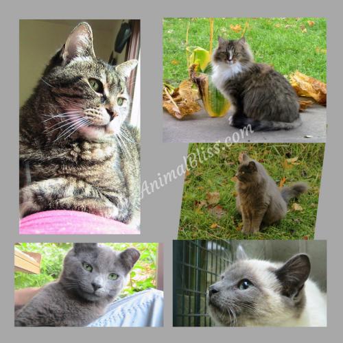 Jeanne Melanson, Animal Bliss - My 5 Cats