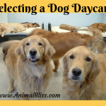 Selecting a Dog Daycare: Some Important Things to Consider