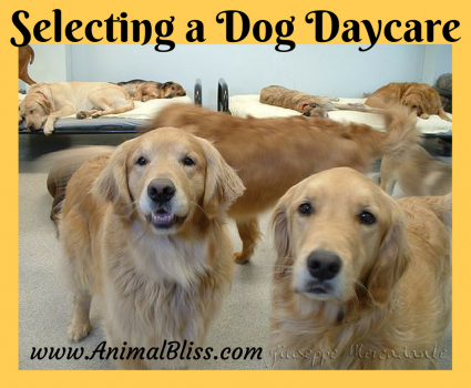 Important Things to Consider Before Selecting a Dog Daycare
