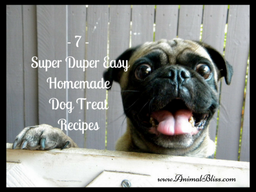 7 Super Duper Easy Homemade Dog Treat Recipes at your Fingertips