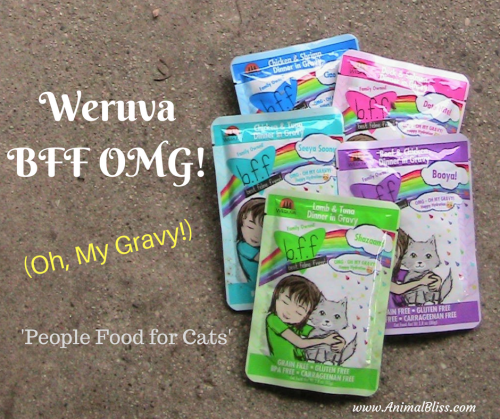Is your cat experiencing any one of these big 3 cat concerns? Find out here and see what you can do with a better diet of Weruva OMG Cat Food