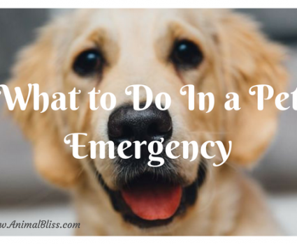 Doggy Dilemma: What to do in a pet emergency.