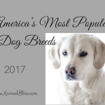 Americas Most Popular Dog Breeds, Rankings List 2017
