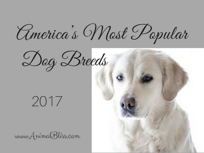 This infographic shows the rankings 188 of America's Most Popular Dog Breeds and how they've changed over the past year.