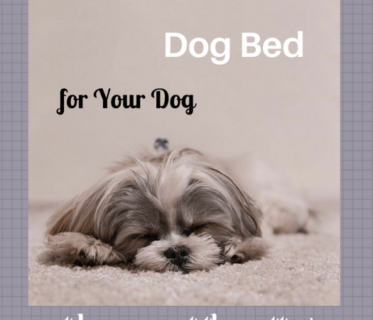 The Best Dog Bed for Your Dog at Home or at the Cottage