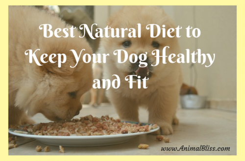 Best Natural Diet to Keep Your Dog Healthy and Fit