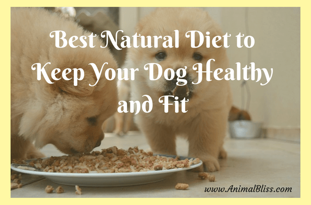 Best Natural Food to Keep Your Dog Healthy and Fit