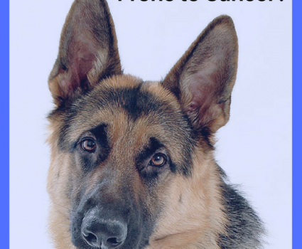 German Shepherds are prone to cancer and rank high on the disease scale but there are things you can do to help protect your dog.