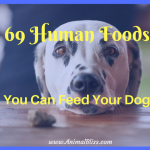 69 Human Foods You Can Feed Your Dog [Infographic]