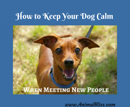 3 Ways to Keep Your Dog Calm When Meeting New People