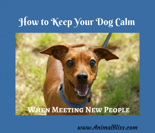 3 Effective Ways to Keep Your Dog Calm When Meeting New People