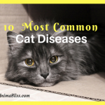 10 Most Common Cat Diseases Infographic