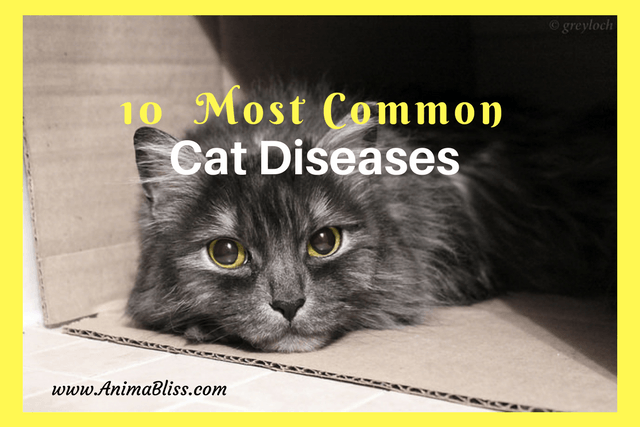 10 Most Common Cat Diseases