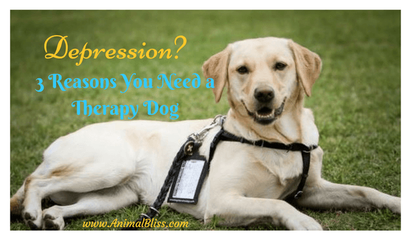 Do you suffer from depression? Here are 3 valid reasons you need a therapy dog to help you through.