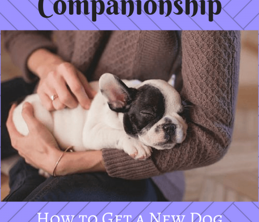 Canine Companionship: How to Get a New Dog to Bond with You