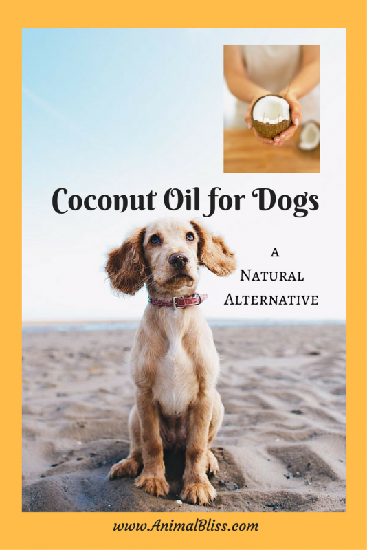 Coconut oil for dogs has proven to provide numerous benefits for our canine friends, from dry itchy skin to digestion issues. Keep reading.