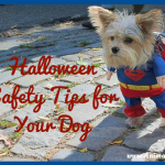 Halloween Safety Tips for Your Dog: Stay Healthy & Happy