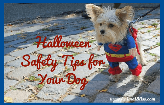 Follow these Halloween safety tips for your dog. As a dog-owner, it is your responsibility to make sure your pups are always happy and healthy.