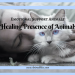Healing Presence of Animals: Emotional Support Animals