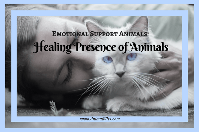 The healing presence of animals on people recovering from trauma, surgery, anxiety, depression and other mental issues is well-documented.