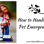 How to Handle a Pet Emergency, Animal Accidents and Injuries