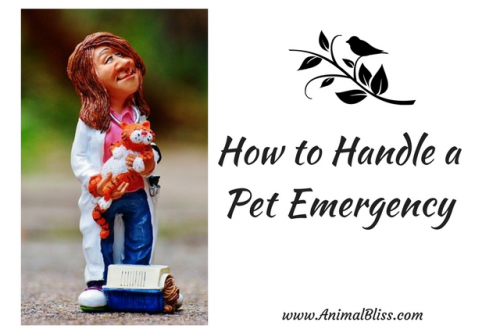Would you know how to handle a pet emergency after your dog or cat is injured? Quickly understanding what to do could save your pet's life.
