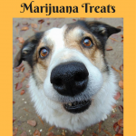 Marijuana Treats for Pets – Benefits of CBD For Your Pets