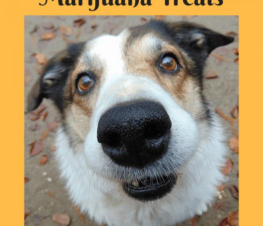 Marijuana Treats for Pets - Benefits of CBD for Your Pet