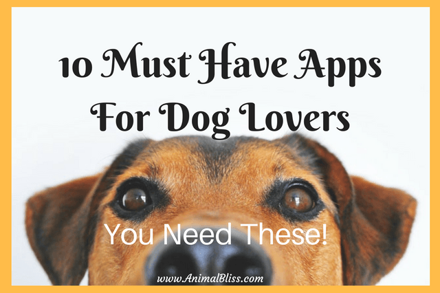 Check out these 10 must have apps for dog lovers if you're always looking for ways to make life better and easier. Download them for FREE!