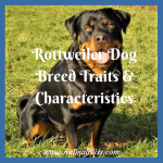 Rottweiler Dog Breed Traits and Characteristics [Infographic]