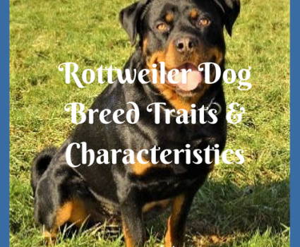 The Rottweiler dog breed possesses inherent traits and characteristics, but each dog differs based on training, environment, and circumstance.