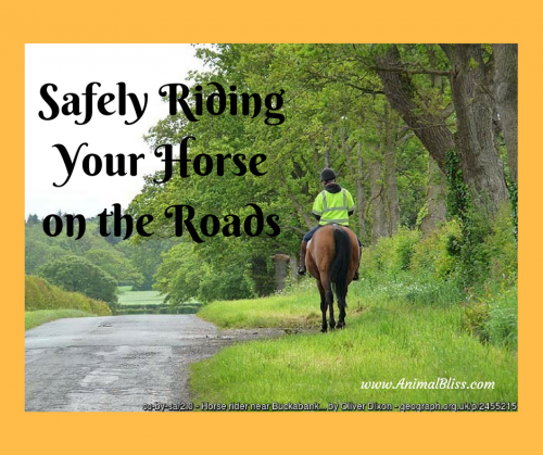 Do you follow the rules for safely riding your horse on the roads? Here are some tips and pointers to keep you and everyone else safe.