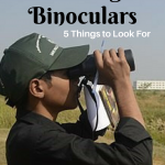 Birding Binoculars – Top 5 Things to Look For