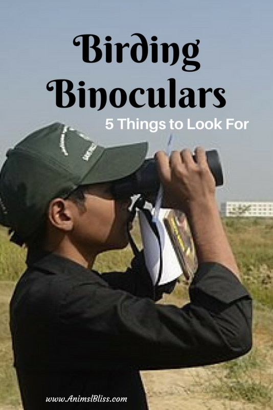 Top 5 things to look for when buy a good pair of birding binoculars.