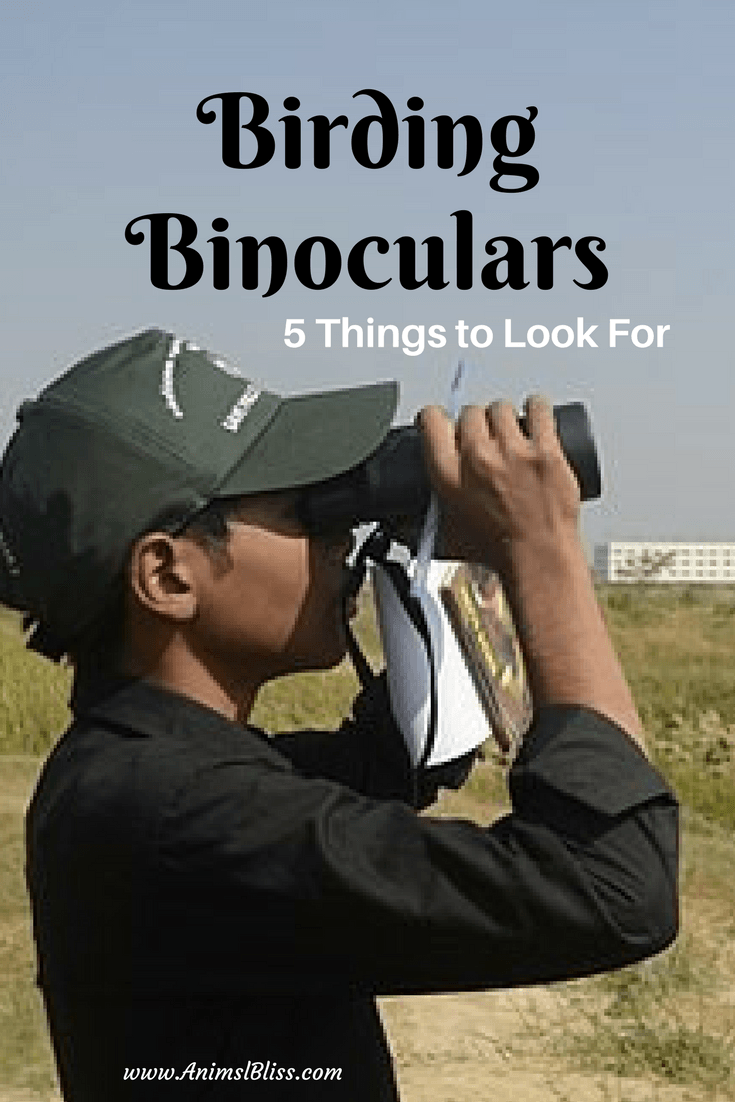 Here are the top 5 things to look for when buy a good pair of birding binoculars.