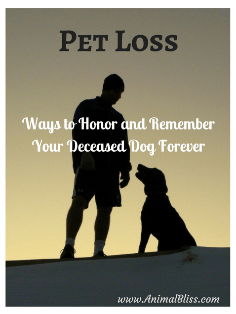 There are many ways by which you can honor and remember your deceased dog forever to keep his memory alive. Here are several ways to do that.
