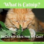What is Catnip? Is Catnip Safe for my Cat?