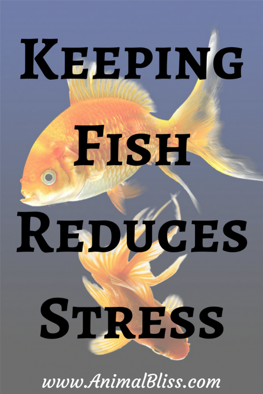 Keeping Fish Reduces Stress and Improves Mental Health
