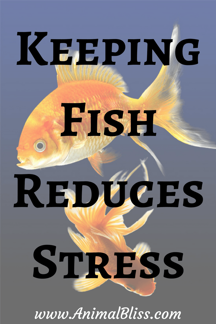Keeping fish reduces stress and improves mental health for Keeping fish