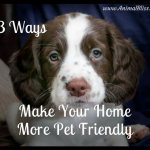 3 Ways To Make Your Home More Pet Friendly