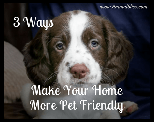 3 ways to make your home more pet friendly.
