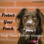 Protect Your Pooch from These 5 Winter Dangers