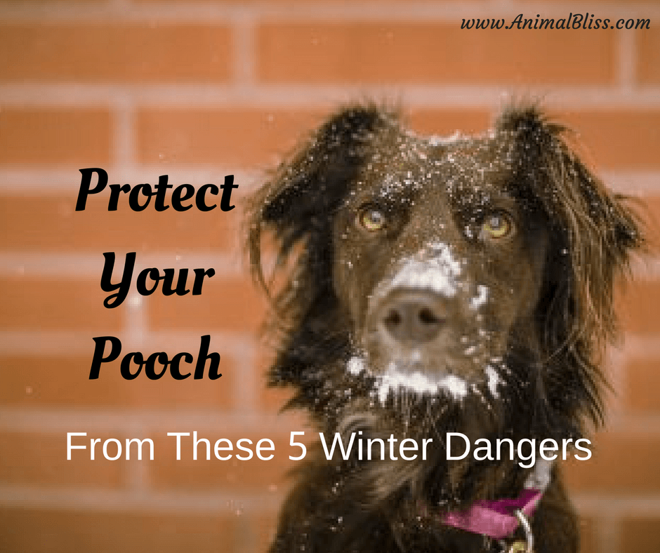 You have a responsibility to protect your pooch from these 5 winter dangers that cold weather and heavy snows bring to dogs of all breeds.