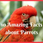 10 Amazing Facts about Parrots You Did Not Know
