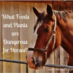 What Foods and Plants are Dangerous for Horses?